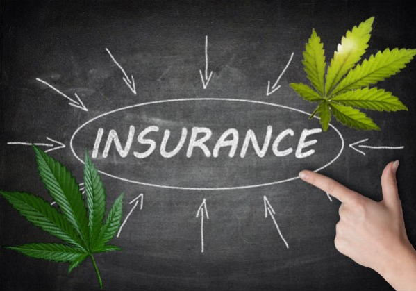 Cannabis Insurance Options Every Grower and Dispenser Needs